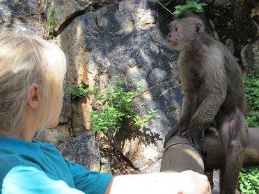 South Africa - Bush Babies Sanctuary